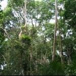 Jozani Evergreen forest