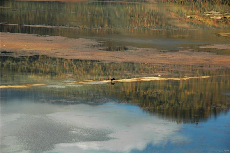 Napa Lake 納帕海自然保護區