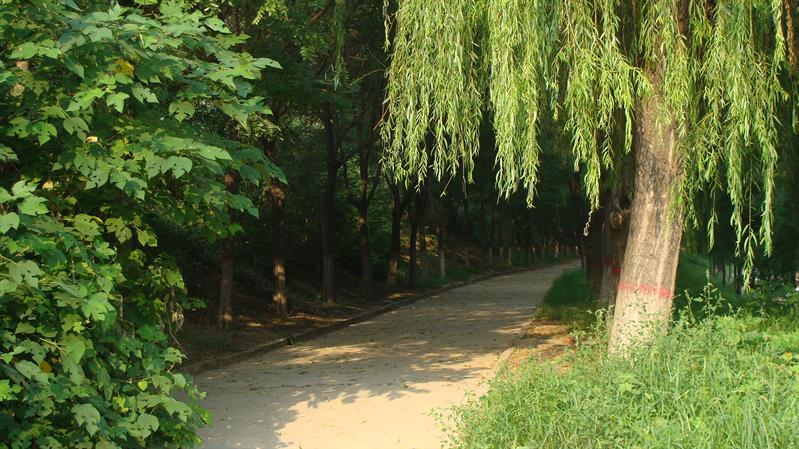 戚城公园南部小路