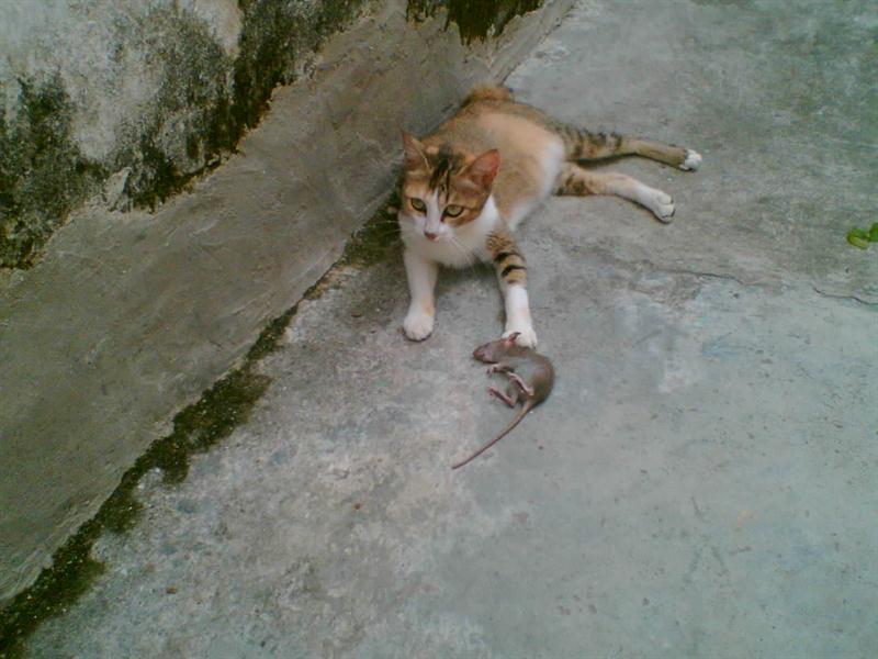 猫猫 (5).jpg
