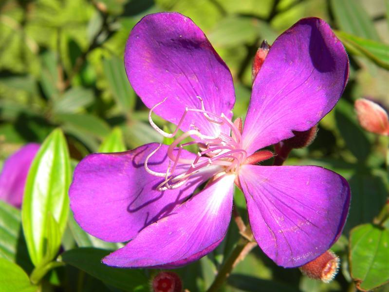 陽明山公園鮮花
