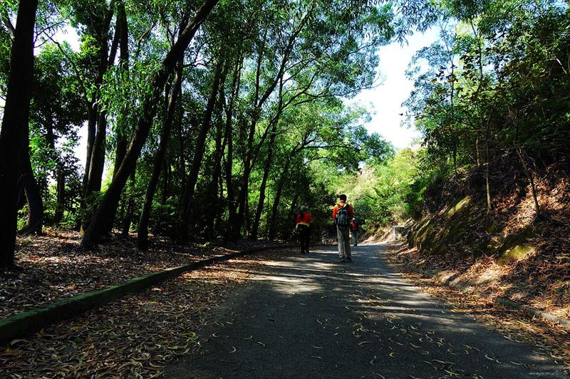 大欖林道伯公坳段 Tai Lam Forest Track Pak Kung Au Section