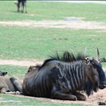 Xiang Jiang Safari Park 香江野生動物世界