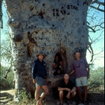BOAB PRISON TREE, DERBY, THE KIMBERLEY, WA