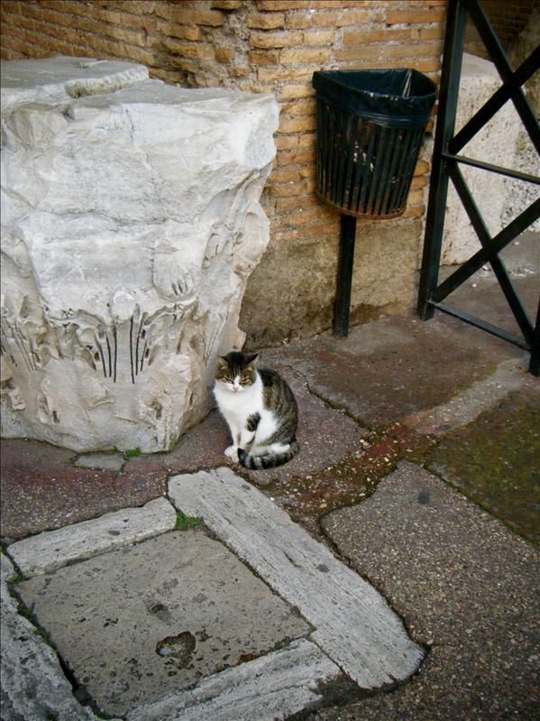 a random cat at the coliseum