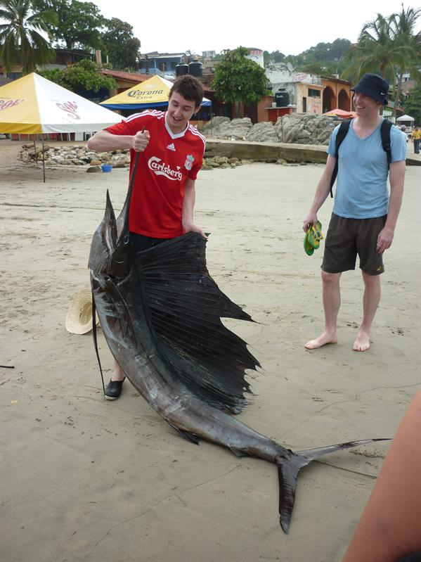 The huge marlin on the beach...