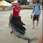The huge marlin on the beach...