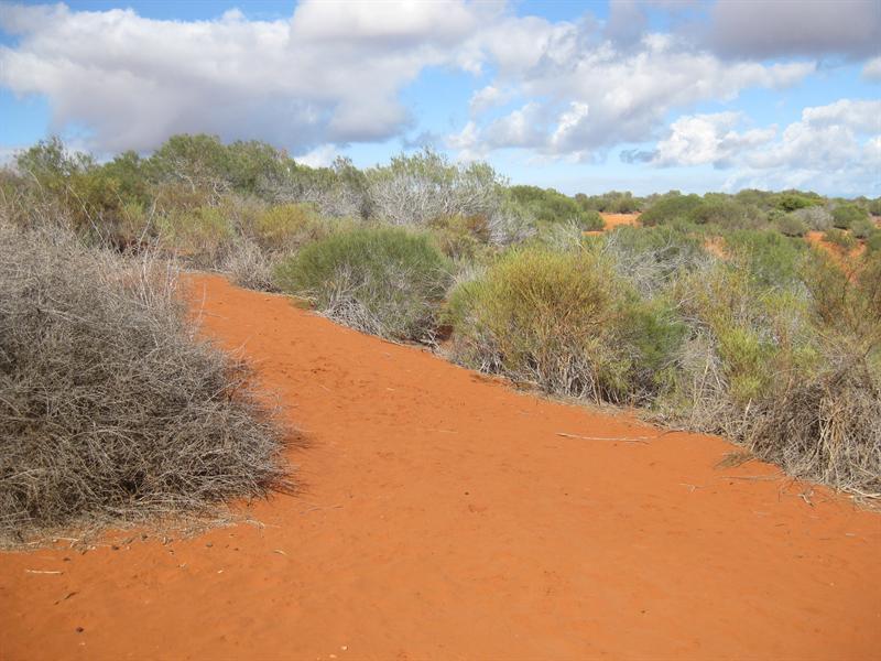 Aboriginal Culture Walk