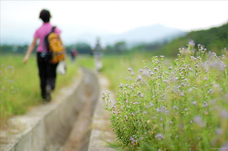 穿過地盤草地
