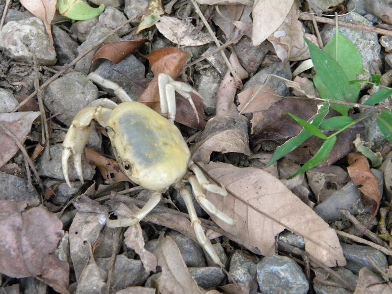 墾丁國家森林公園小蟹