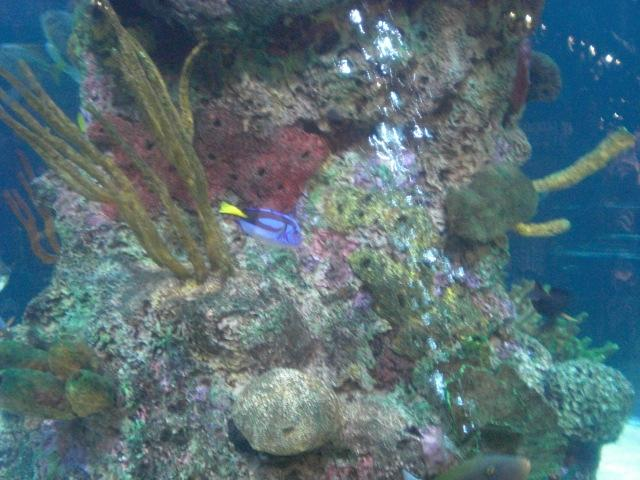 DORY GETS AROUND!!!! (Aquarium @ Rainforest Cafe in MGM Grand)