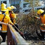 20080316 Hill Fire in Jia Yuk Kwai Shan 假玉桂山山火現場