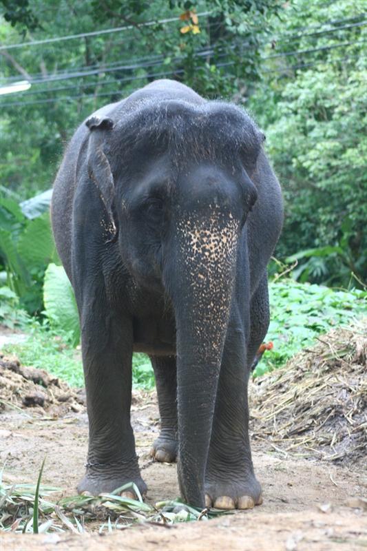 Elefanti...