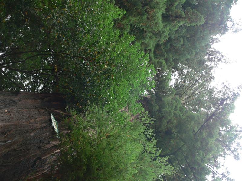 immortal tree sideways