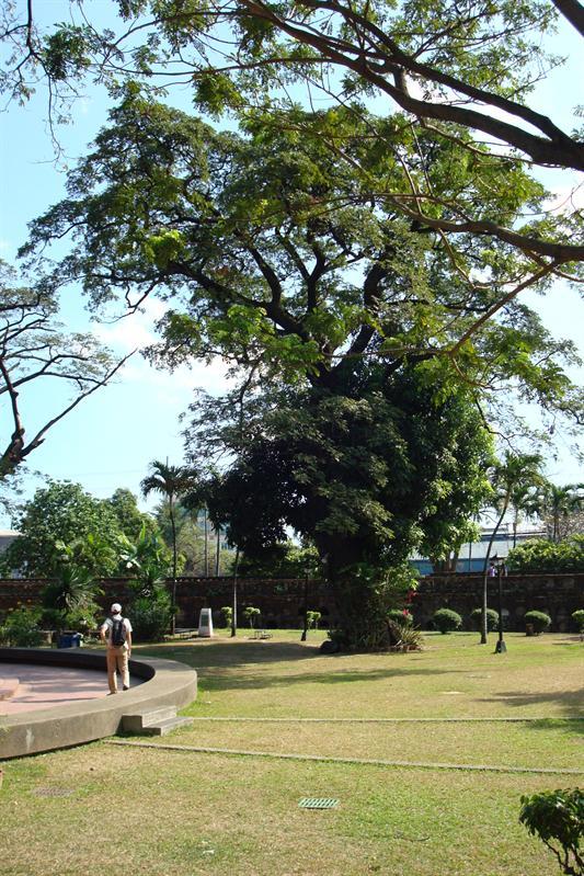 dawny cmentarz zamieniony w park/ old cemetary changed into a park