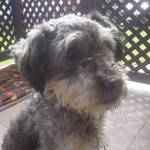 dog - Benji