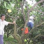 【Easy Climber】20100303登山社第69次活動-新埔飛龍步道•廖家果園採果