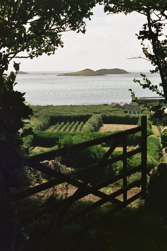 gate, hedges, sea, islands