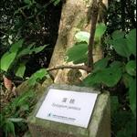 DSCN8553 植物名稱.jpg