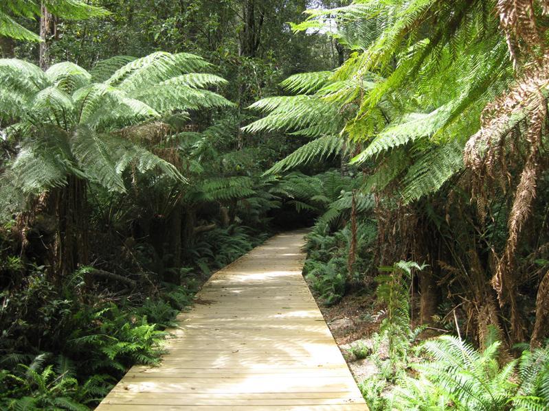 Tassie Rainforest