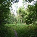 Sasquatch Meadow