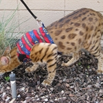 savannah-cat1.jpg