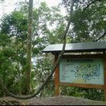 棲蘭森林步道 (25).JPG