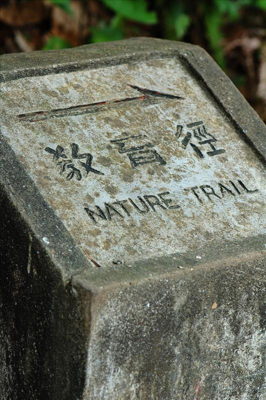 自然教育徑 Pineapple Dam Nature Trail
