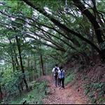 DSC_5442 Pak Shek Kiu Trail白石橋徑.jpg