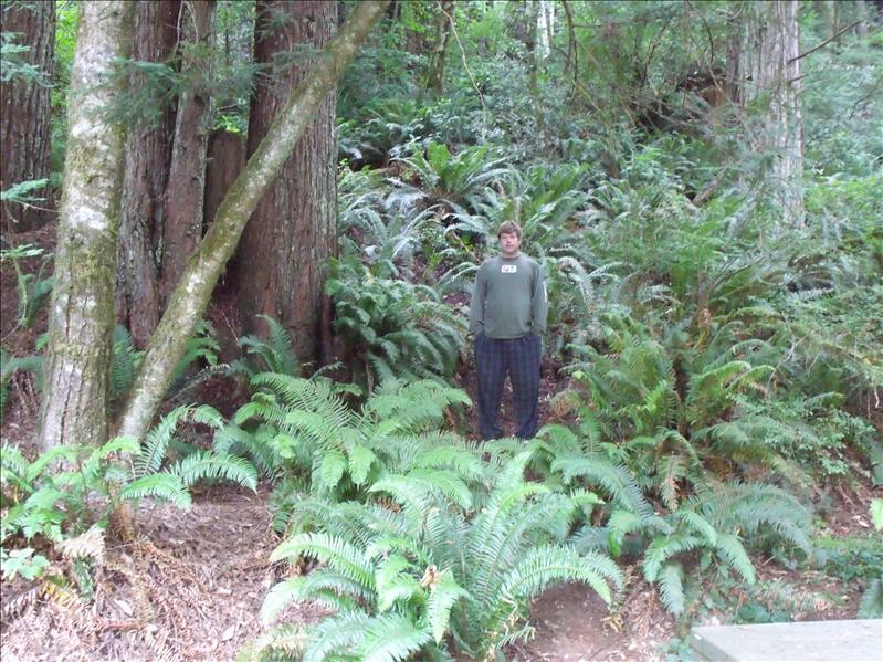 Michael by our camp site lost in the fern, they are BIG