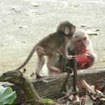 烏山獼猴保護區 (25).JPG