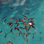 feeding frenzy