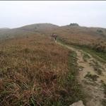 MacLehose Trail Stage 8麥理浩徑第八段