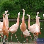 Birds at Bronx Zoo