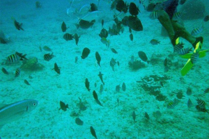 under water 11