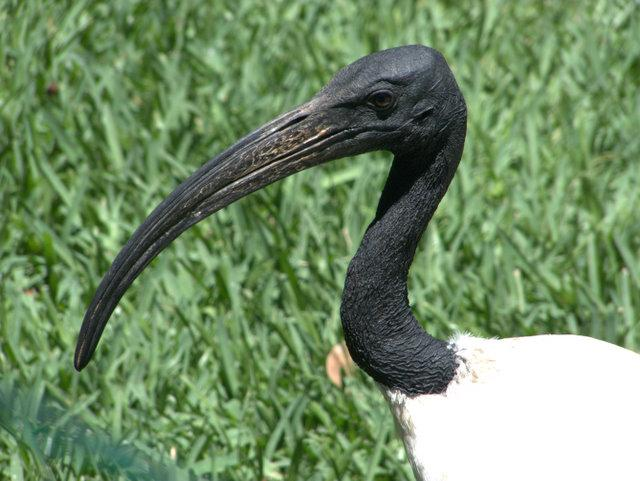 Lots of exotic birds at the Lagos zoo