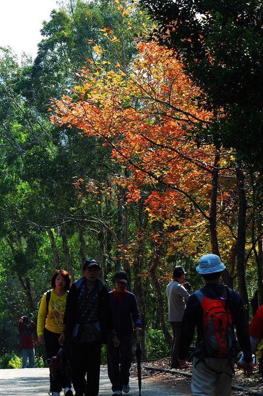 大棠自然教育徑 Tai Tong Nature Trail
