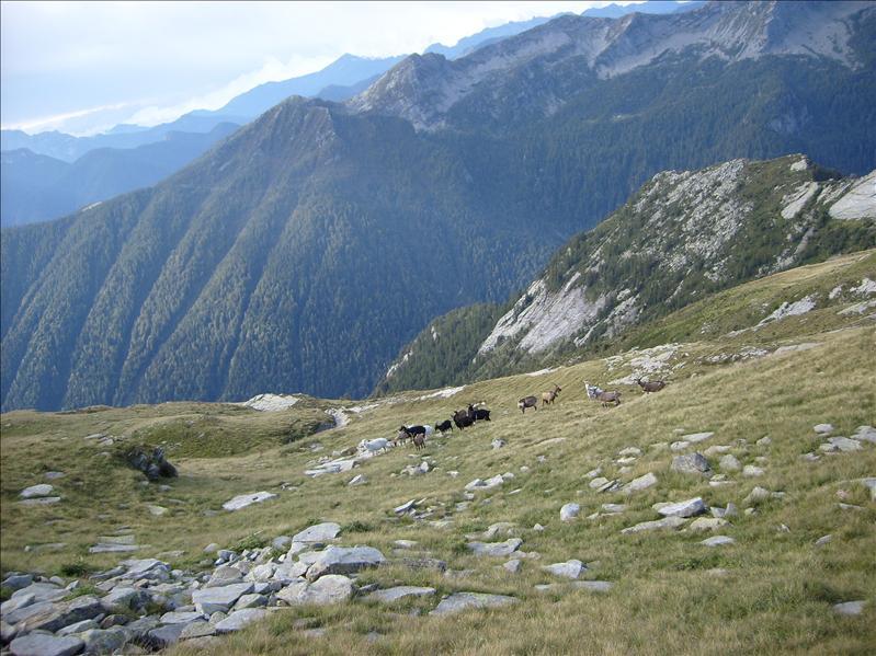 Alpe Ribia•2009