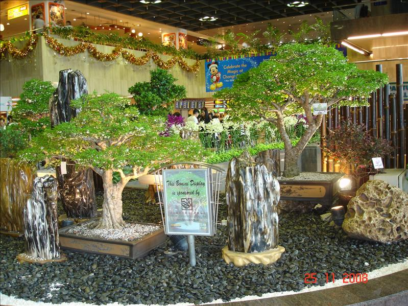 Bonsai plants and fossilized woods