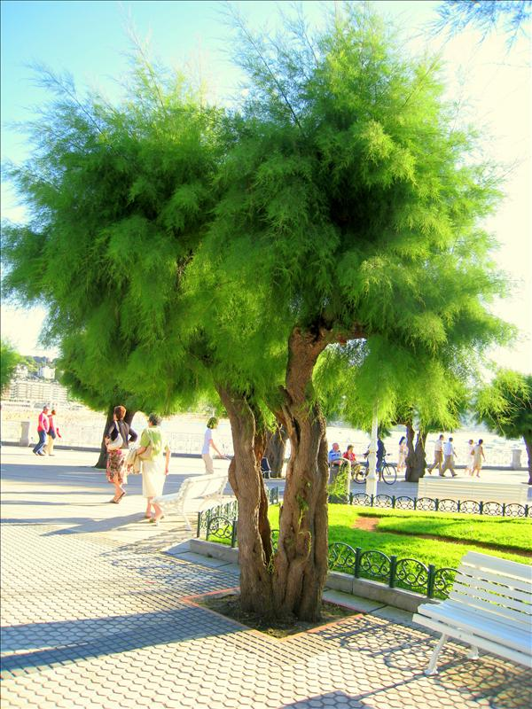 Very fuzzy tree