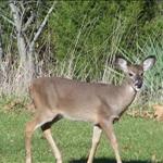 typical missouri deer watchs