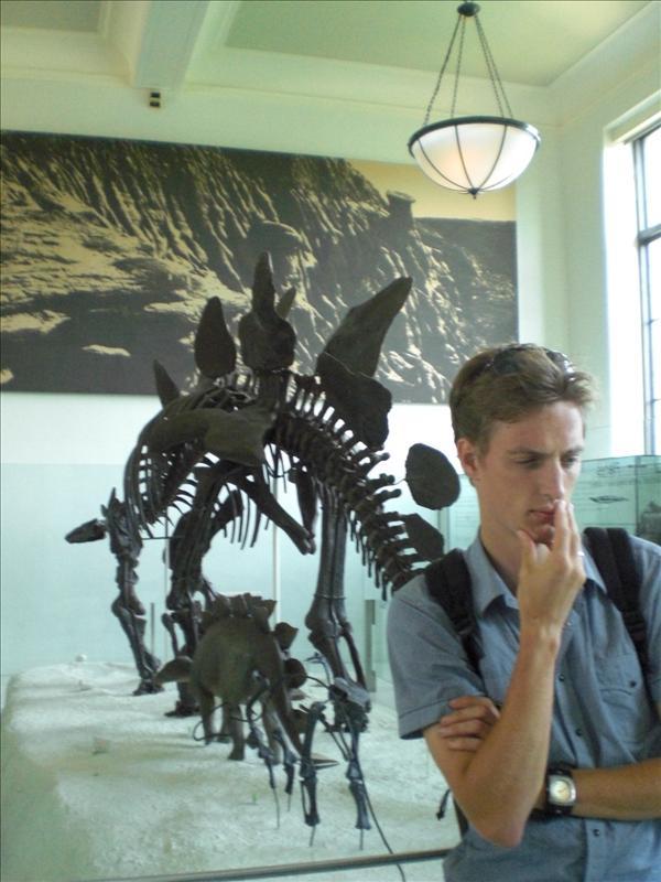 Stegosaurus is bart aan het besluipen