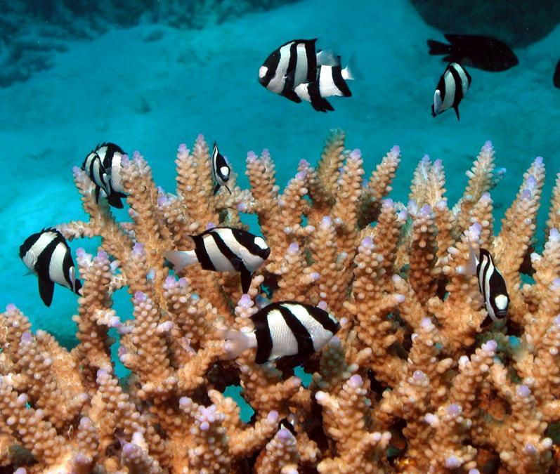Snorkelling at the Great Barrier Reef.