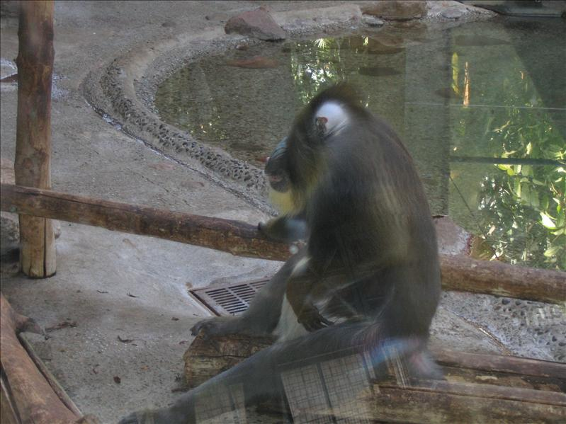 Toronto Zoo - 15
