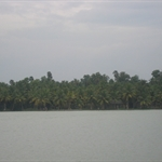 lots of coconut trees in Kerala.. I beleive 70% of the trees in Kerala are coconut trees and the remaining Banana trees