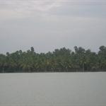 lots of coconut trees in Kerala.. I beleive 70% of the trees in Kerala are coconut trees and the remaining Banana trees