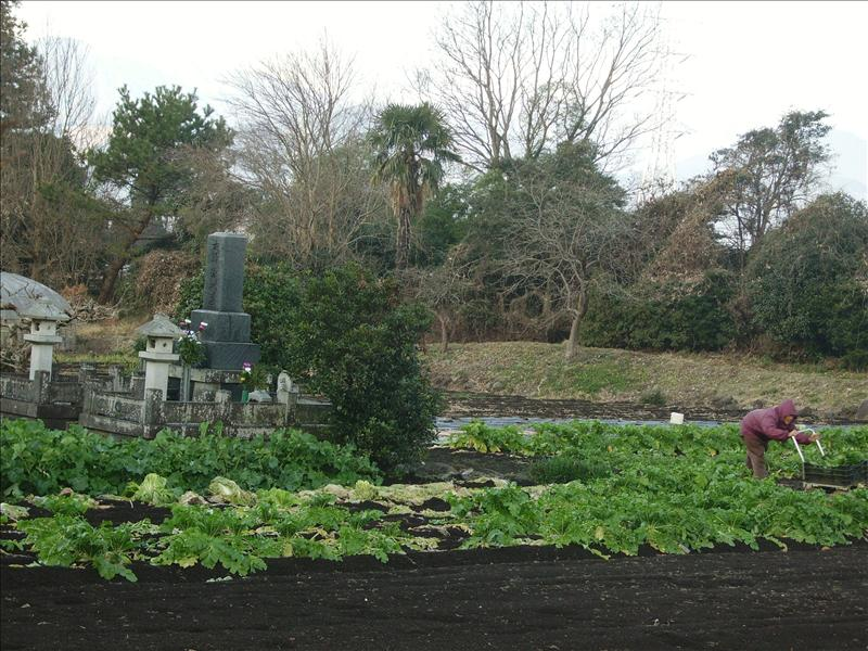 vegetable garden•obaasan