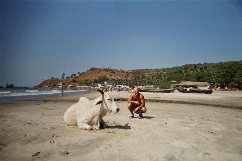 tim and a cow, arambol beach