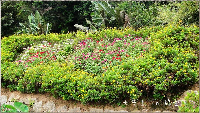 美麗的花朵-4