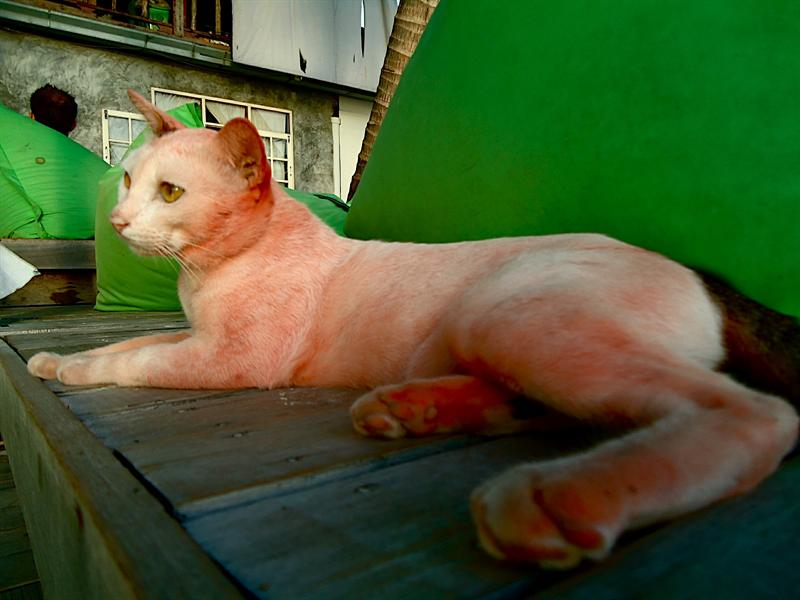 Yes, it's a pink cat.